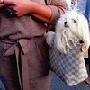 Photo by Lily Ko<br /> <br /> In This Scene:  Precious little pooch in a purse! Vanilla (puppy) looking pretty in Stephanhi's Louis Vuitton Damier Azur canvas tote, at Off The Grid. Stephanhi's tied-waist sweater dress is by Express.