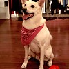 Photo by Lily Ko<br /> <br /> In This Scene: Andrew Bricker's beautiful dog, Charlie, at the Sidney Lo book launch at Azalea Boutique. Now, I know there are all sorts of crazy four-legged fashions now, but nothing beat the classic red bandana on a well groomed pup.