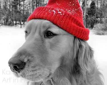 Ski Dog