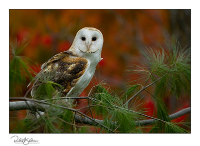 birdsofprey-1DMarkIV-191014-6647 and sig