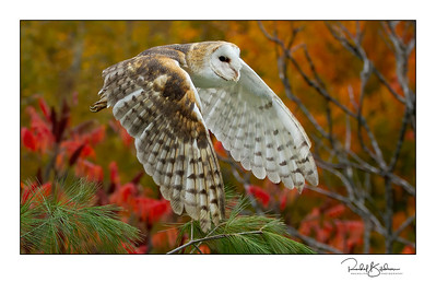 birdsofprey-1DMarkIV-191014-6912 and sig