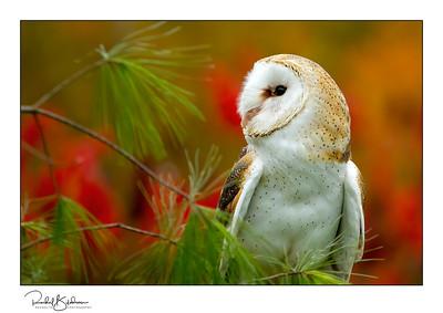 birdsofprey-1DMarkIV-191014-6794 and sig