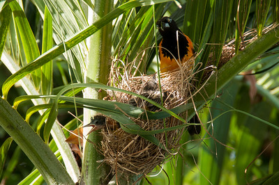The precarious nest