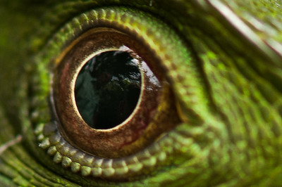 This is how the iguana saw Fred and me (my lens).