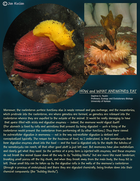 How and What Anemones Eat. 5