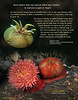 Sea Anemones - why they open and close...