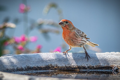 Birds and Flowers-7319
