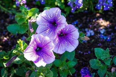 Garden-8367
