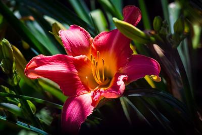 Garden-8366