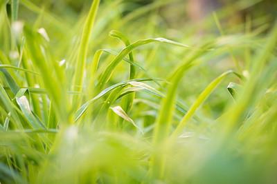 Emerald Isle--Plants-9889