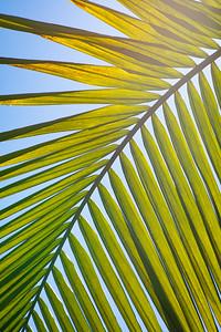 Palm Island--Plants-0040