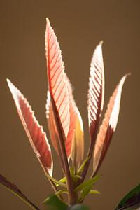 Palm Island--Plants-0039