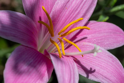 Flowers and Garden-5745