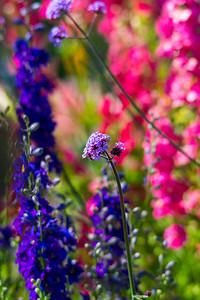 Garden-8452