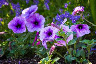 Garden-8414