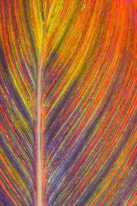 Leaves-3836