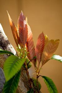 Palm Island--Plants-0035