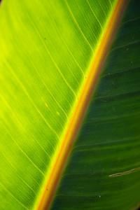 Palm Island--Plants-0003