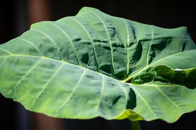 Emerald Isle--Plants-9899