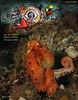 Not so giant  - Giant Pacific Octopus, Enteroctopus dofleini.<br /> Keystone Pilings, August 12, 2009