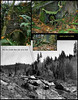 Steve provided me with some historical photographs of what the place looked like in the 1920s, when a small hydroelectric dam was located at the Jim Creek, where we were able to swim with the salmon..<br /> The forest is covering slowly the last remnants of the operation..