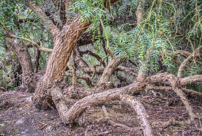 Shipley Nature Center-0482_81_80_79_78_HDR