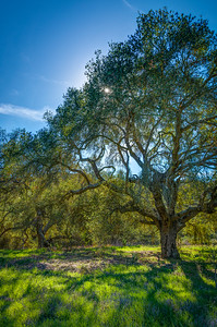 Laguna Coast Wilderness Park-5980_79_78_77_76_HDR