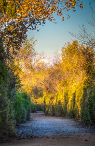 San Joaquin Wildlife Sanctuary-4759_8_7_6_5_HDR