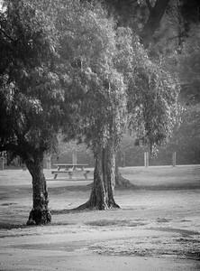 Huntington Central Park-2245-2