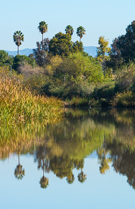 San Joaquin Wildlife Sanctuary-8145