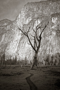 Yosemite--Early morning walk to Swinging Bridge-2059