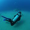 November 16, 2016 Maya & BULL SHARK  ( Carcharhinus leucas )  El Vencedor wreck
