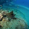 Nov 15, 2016  PANAMIC GREEN MORAY EEL   (Gymnothorax castaneus ) , Del Morro reef, Cabo Pulmo