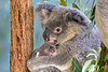 Fauna of Australia and the UK, both wild and in captivity, native and non-native