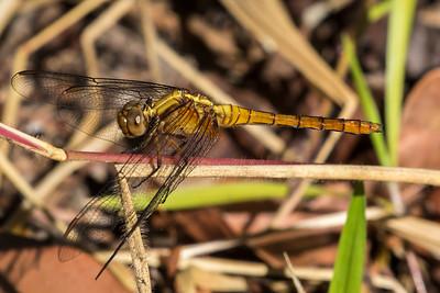 Fauna of Australia and the UK, both wild and incaptivity, native and non-native