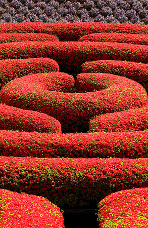 Red Maze 13x20 touched up
