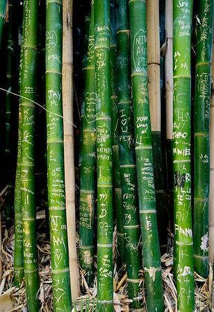 Bamboo Grafitti 13x19