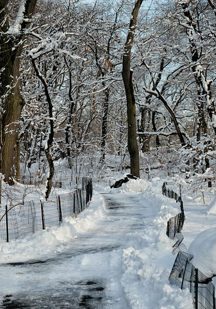 Path in winter 2