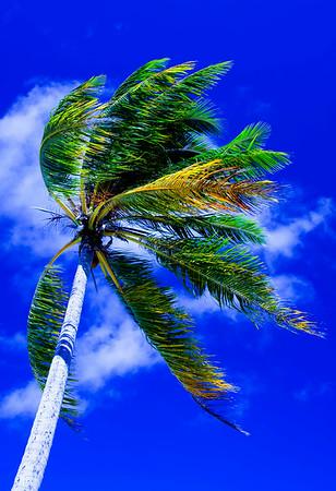 Palm 13x19 Blue