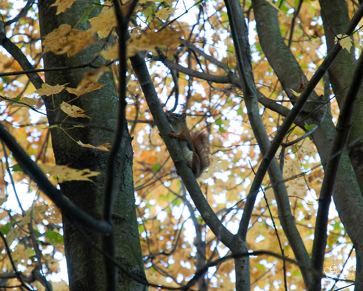 October 22, 2016:  Everything is interesting when you're a young pine squirrel out exploring for the first time.