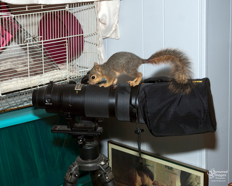 November 22, 2016:  It appears we have a new Nikon aficionado in the house.