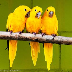 Bird Park Ambigua, Switzerland
