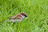Sparrow from Marwell Zoo