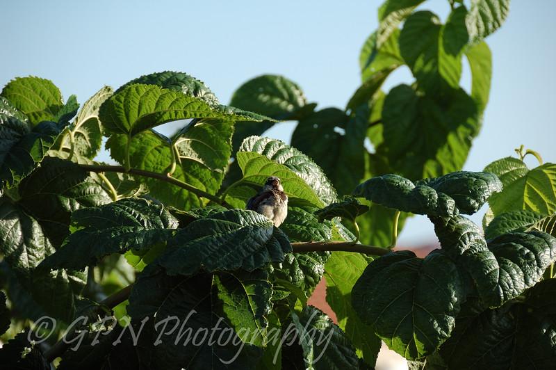 Sparrow outside our apartment, Menorca