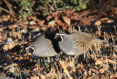Duraznitos Springs Birds