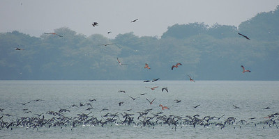 Kites and commorants in fishfrenzing