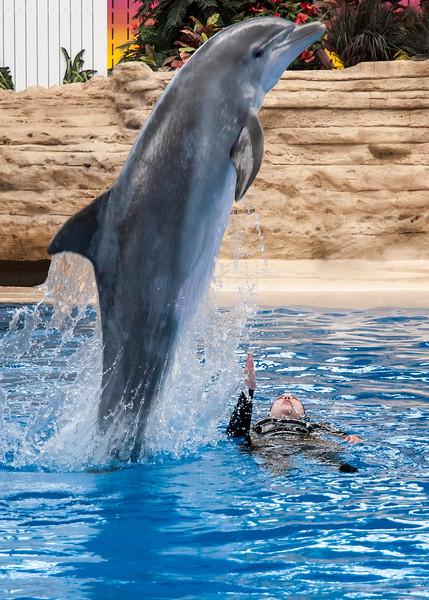 dolphin; 5x7
