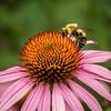 Bumble Bee; 7x7
