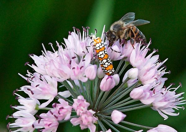 honey bee and bug; 5x7