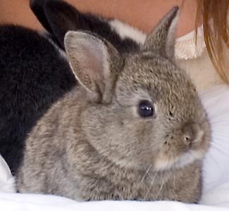 Small brown bunny rabbit